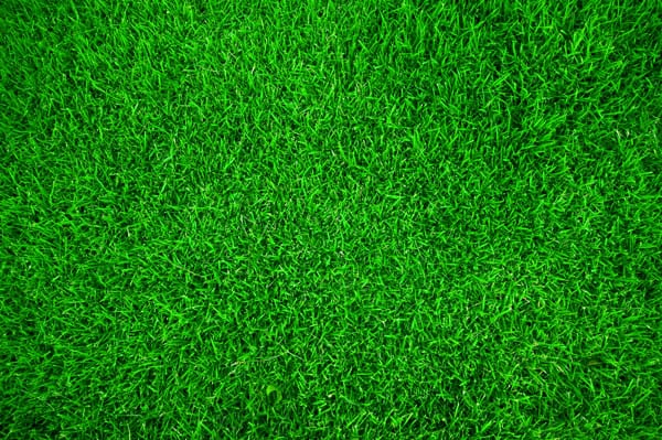 Perfect-looking-green-grass