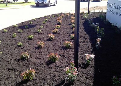 plant installation landscaping