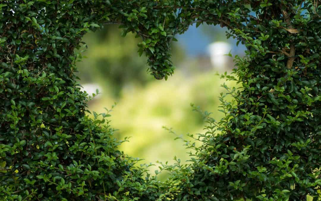 Garden-Makeover-Heart-Hedge