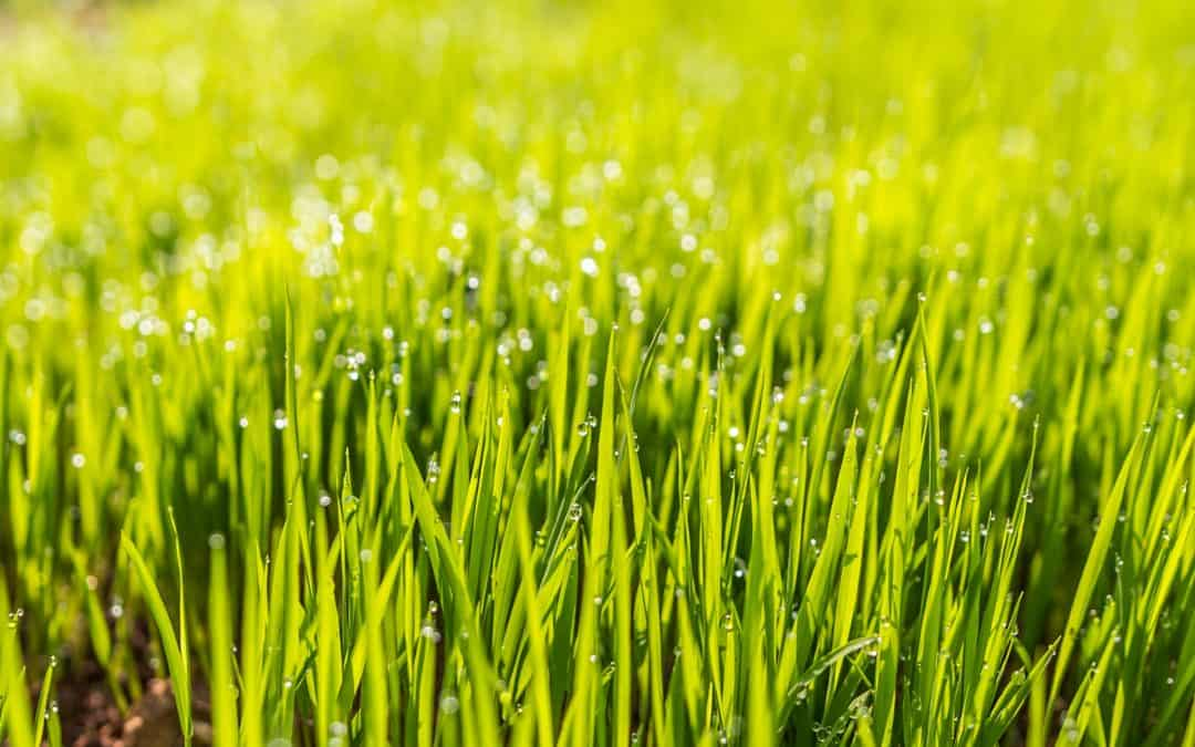 Home Lawn Care Maintained - A New Trend
