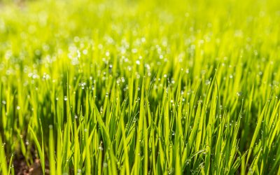 Home Lawn Care Maintained – A New Trend