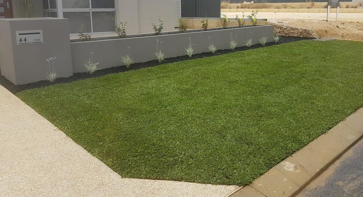 Palmetto Buffalo Turf landscaping services