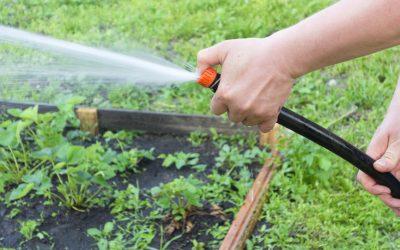 10 Top Tips for Watering Your Garden in Summer