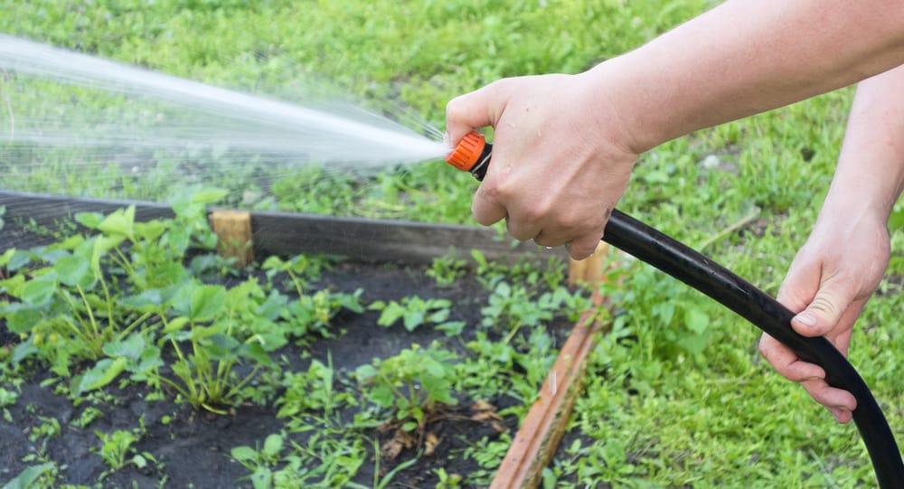 landscape garden 10 Top Tips for Watering Your Garden in Summer