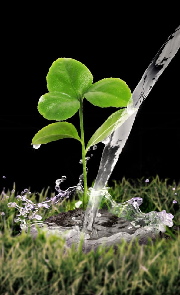 water the soil